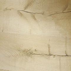Chêne fossile